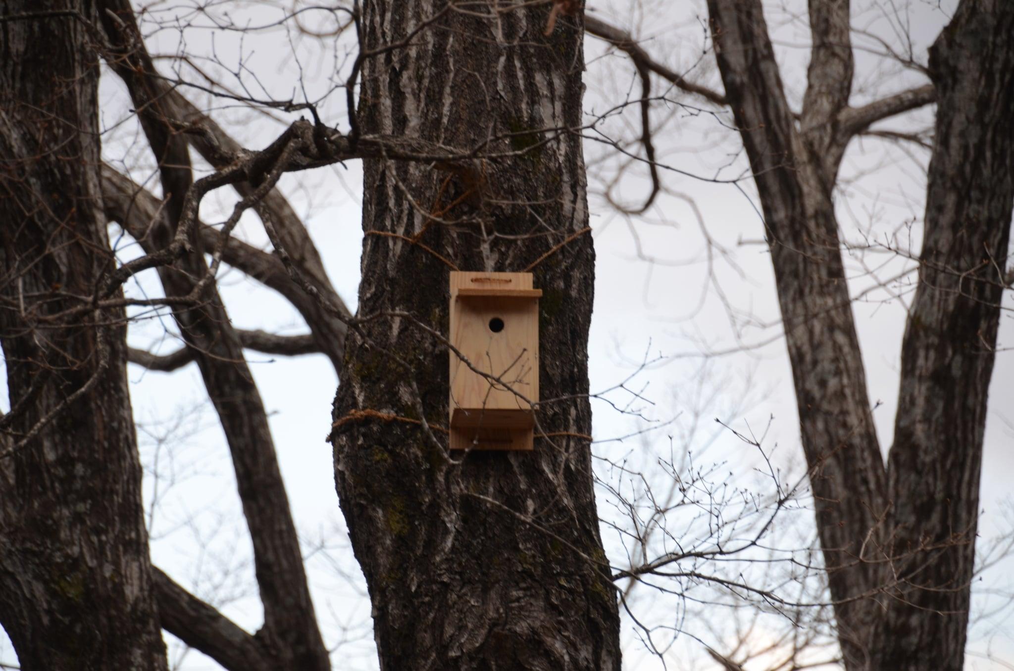 巣箱 シジュウカラ